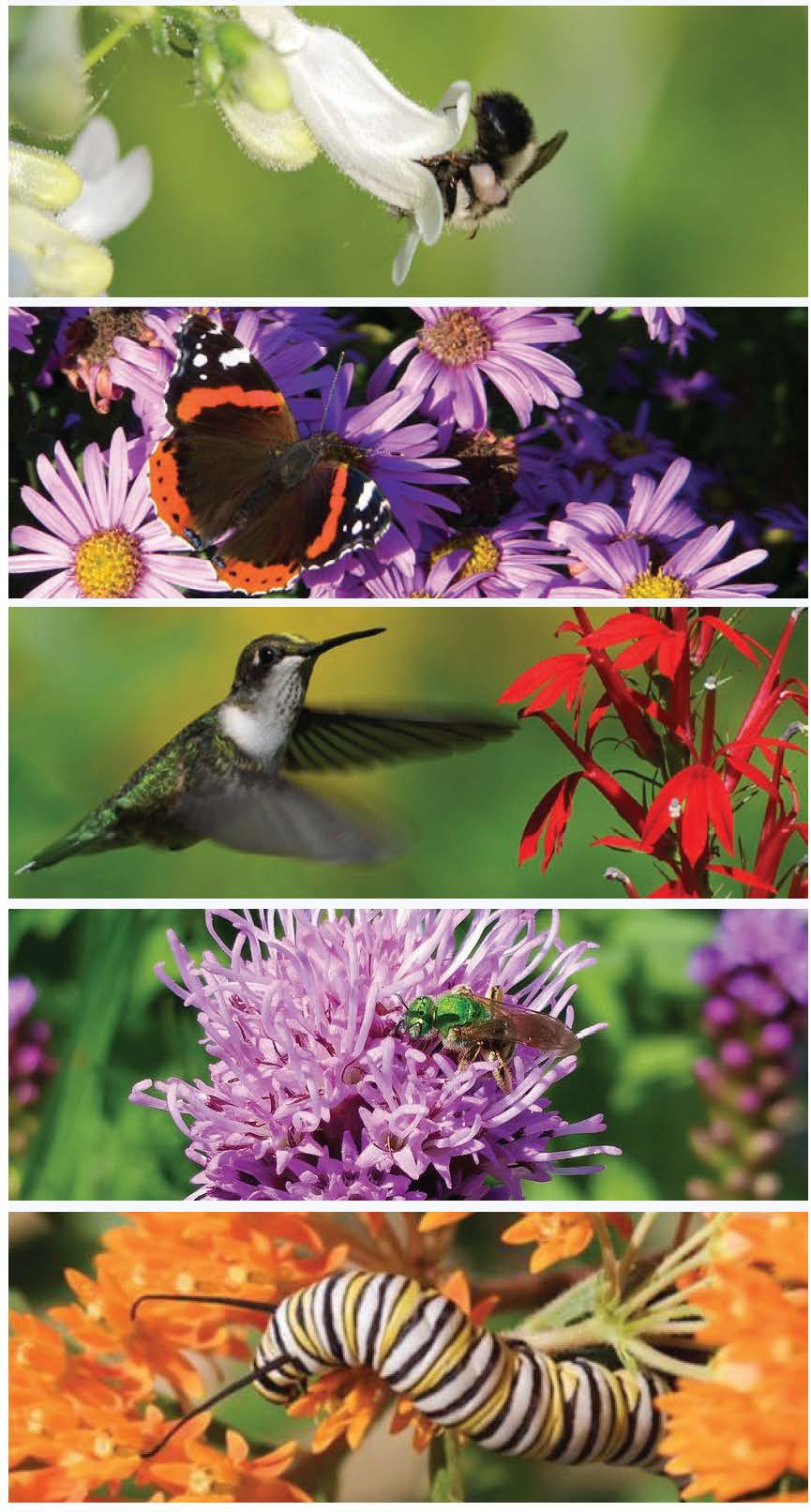 Our pollinator native plant combo supports biodiversity at a local level, and is important for ecological landscaping. Many wildflowers for a naturalized garden.