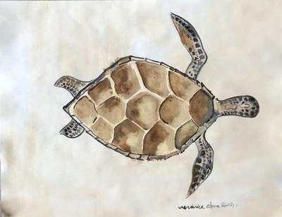 Ronquin-Hawsbill Turtle.jpeg