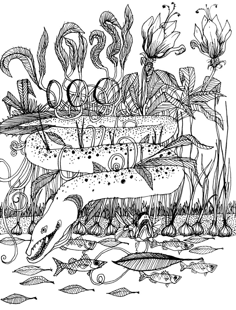Swamp Eel