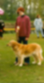 Ginger von den Rheinauen
