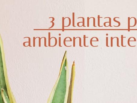 3 PLANTAS PARA AMBIENTE INTERNO