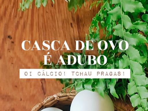 CASCA DE OVO É ADUBO SIM! CHEGA DE PRAGAS!