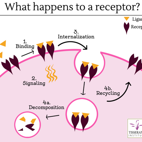 We don't need to clean our cell receptors. That's a myth.