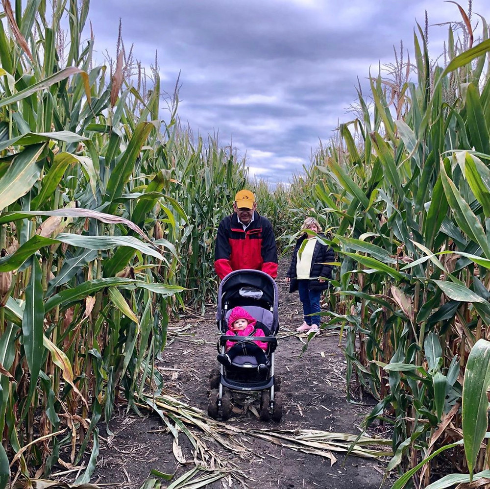 Basses' Taste of Country Corn Maze