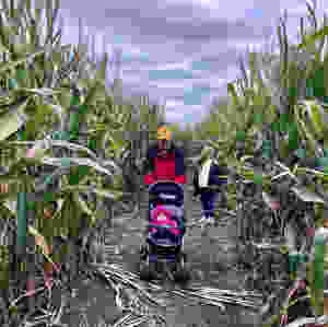 Basses' Taste of Country Corn Maze