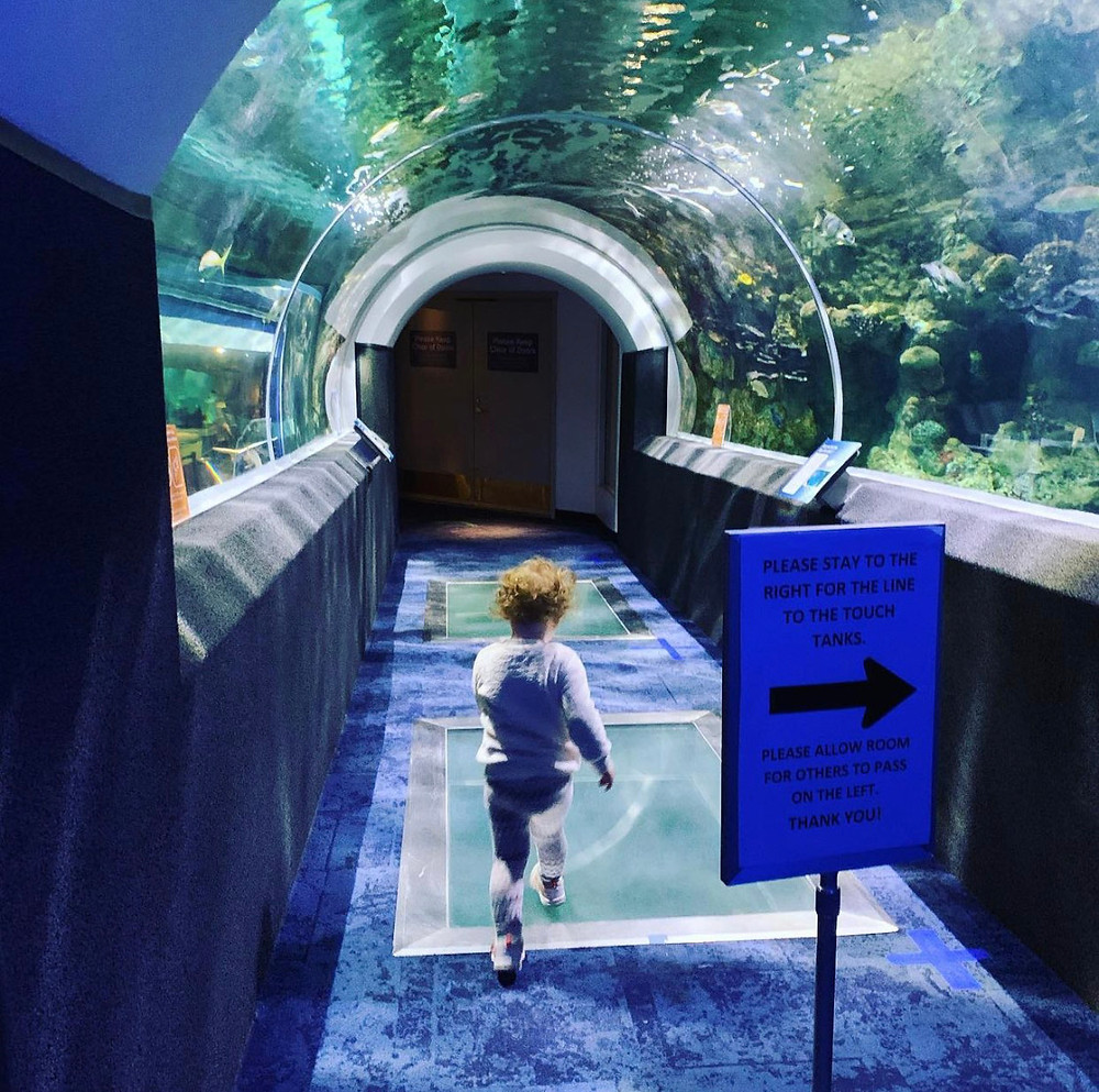 The immersive aquarium tunnel is a highlight of the visit. Photo: Instagram, @megaronincheez