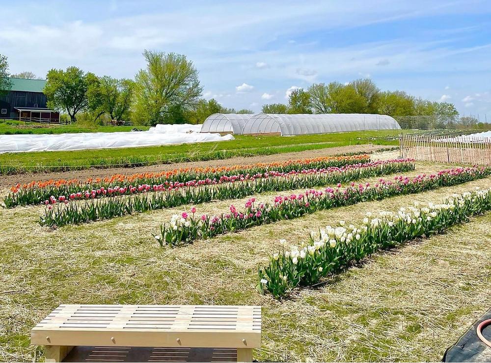 Happy Day Farmhaus Tulip Fest Germantown