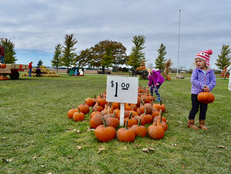 15 Pumpkin Patches You Can Visit in 2020