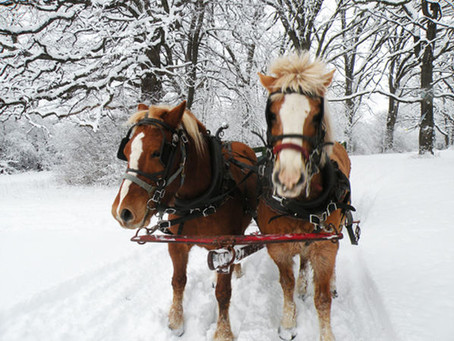 Here's where you can go on a Horse-Drawn Sleigh or Carriage Ride