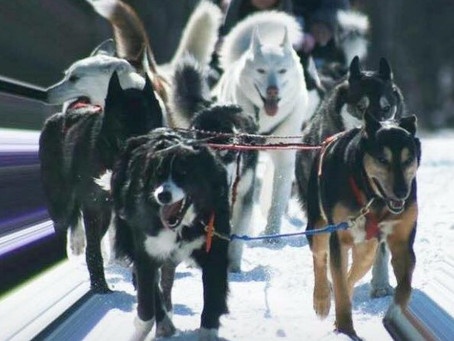 Dog sled rides begin in January!