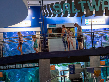 6 Aquariums in Milwaukee Your Family Will Love (2021)