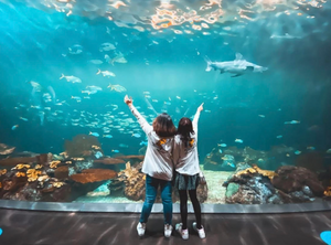 The Shedd Aquarium is a must-visit for Midwest families.