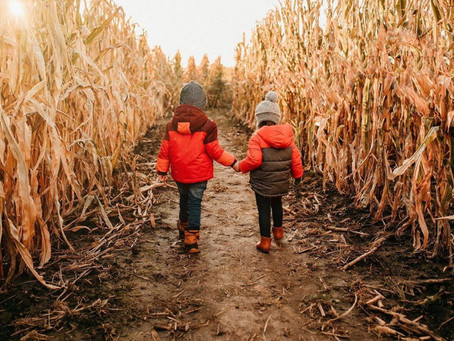 10 Not-So-Scary Corn Mazes (With Safety Measures in Place)