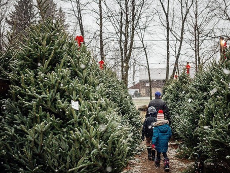 Top Christmas Tree Farms to 'Pick' From in Metro Milwaukee