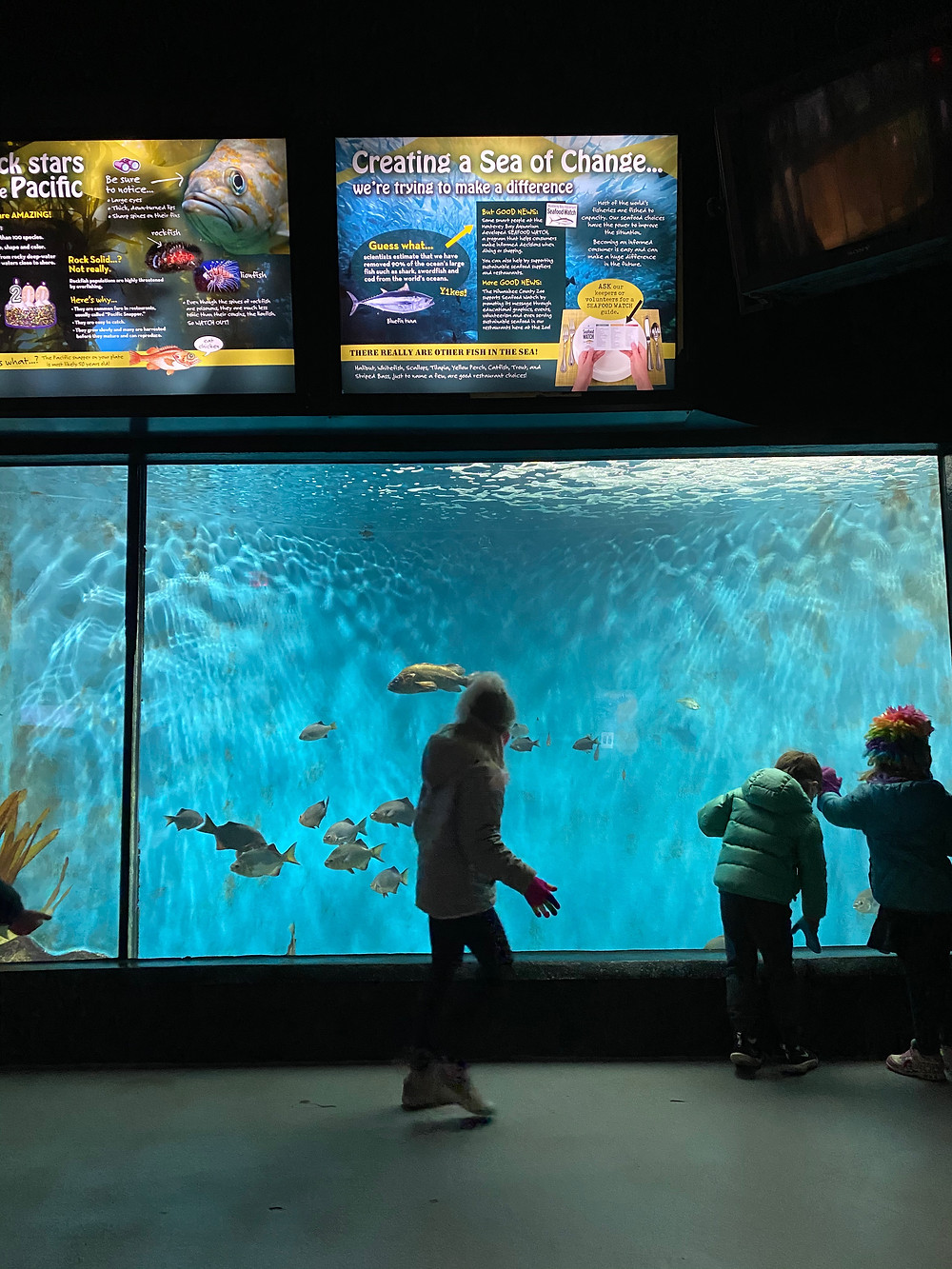 Peek into the 28,000-gallon Pacific Coast Marine Aquarium at the Zoo.