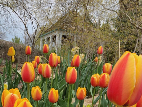 Boerner Botanical Gardens in Hales Corners: Your Quick Guide (2021)
