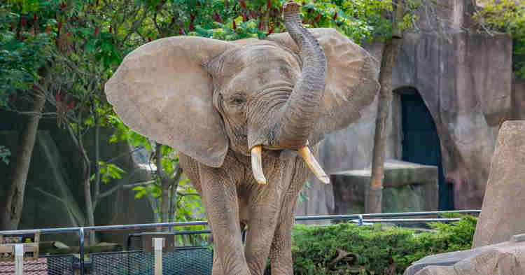 The Milwaukee County Zoo has recently invested in renovating its Hippo & Elephant exhibits.
