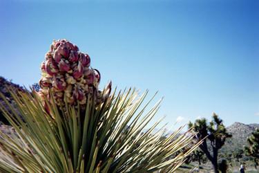 Joshua Tree National Park, 2020