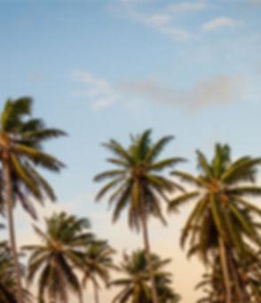 Palm Trees