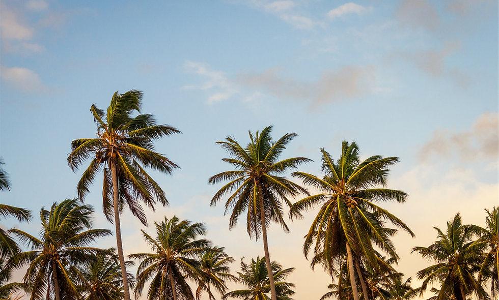 Key West Mini Journey