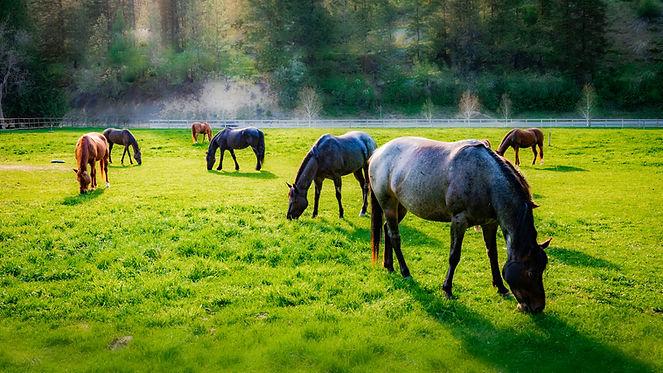 Pasture blur.jpg