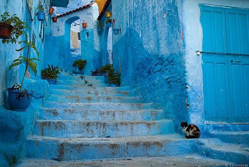 Blue Cat Corner Morocco