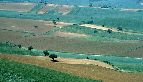 Turkish Fields