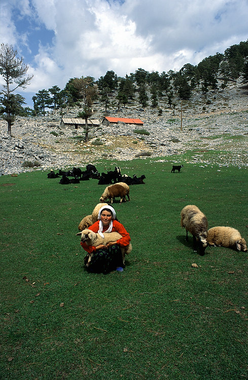 Village Girl with Sheep