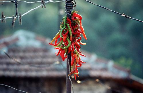 Sun Dried Chillies