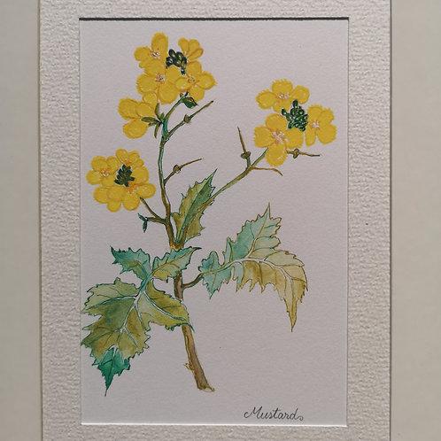 Mustard 15