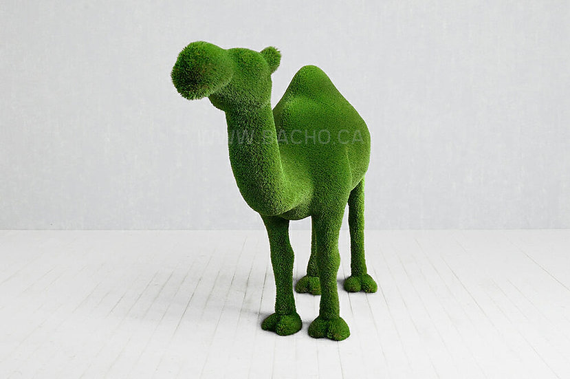 Camel one Humped - 2.2 x 3.0 x 0.9 m