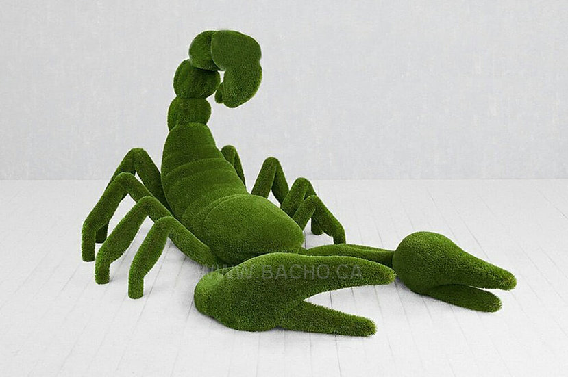 Scorpion - 3.50 x 2.30 x 1.90