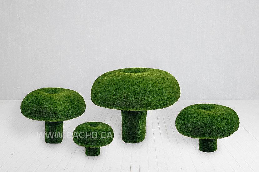 Set Russula Mushroom