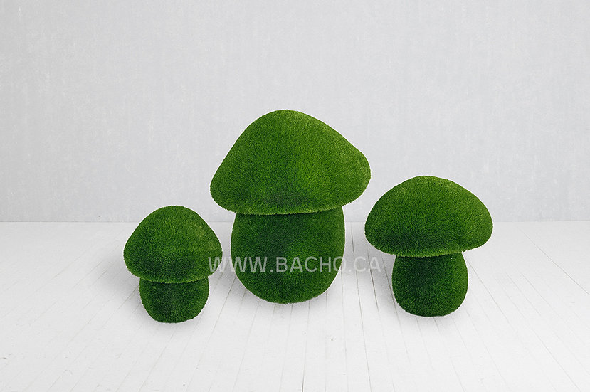 Set of Cep Mushrooms