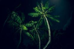 Palmy nights