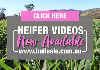 Heifer Videos Available