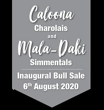 Bull Sale Banner