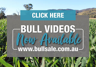 Bull Videos Available