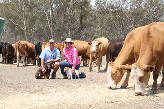 Impey - Carcase quality key for breed's
