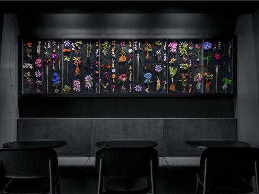 Snøhetta unveils Burnside, an art & culinary space in tokyo