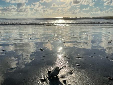 Friday Beach Walk