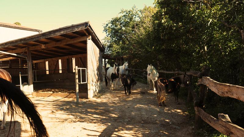 Bild Stallungen 2