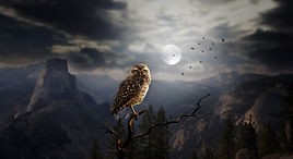 owl-2320703_1920.jpg