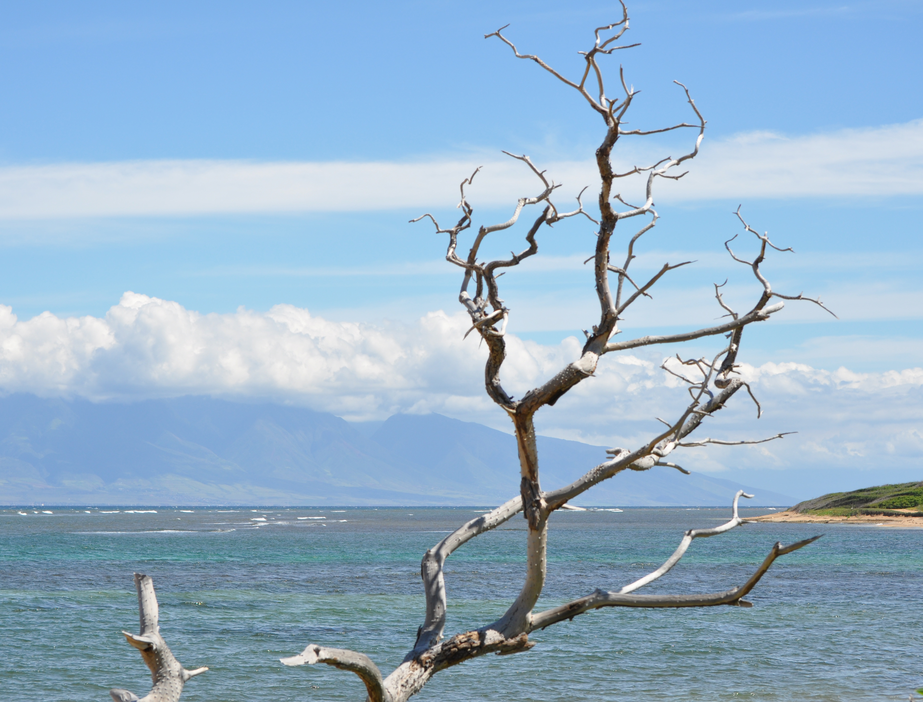 Branch over sea
