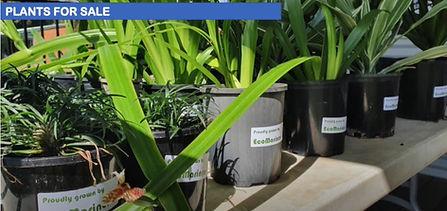 Dunwich plants.jpg