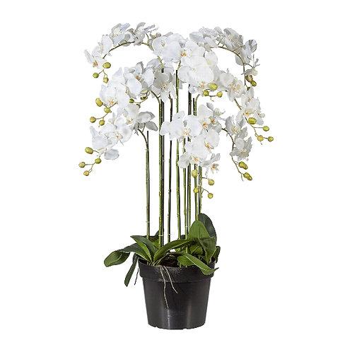 Orchideenarrangement L