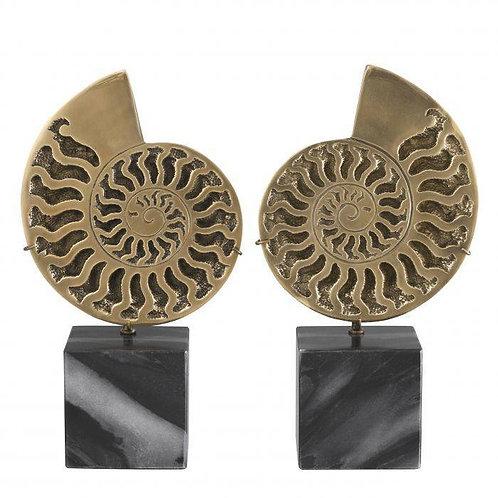 Ammonite set of 2