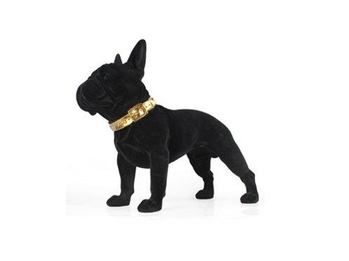 Dog Canela black