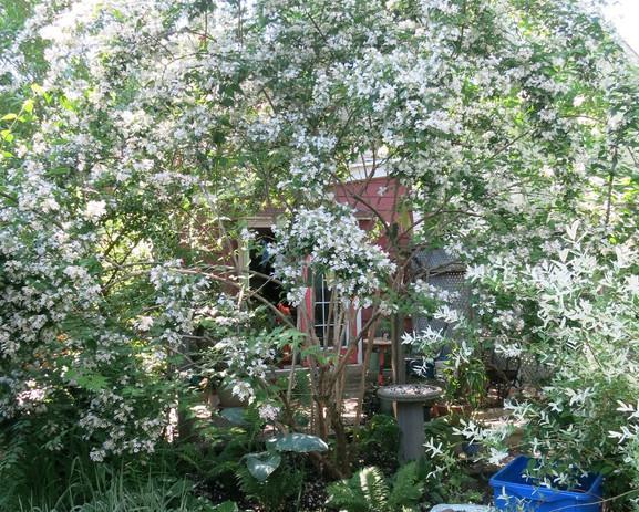 the back garden.jpg