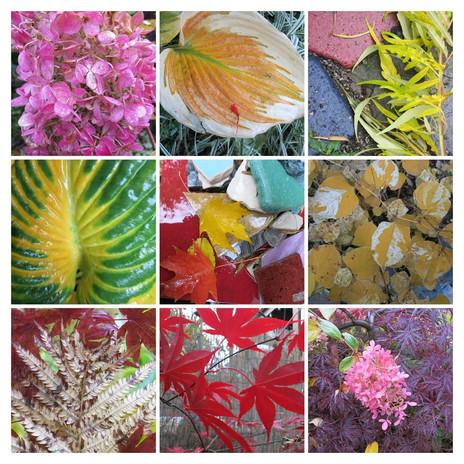 garden in fall.jpg